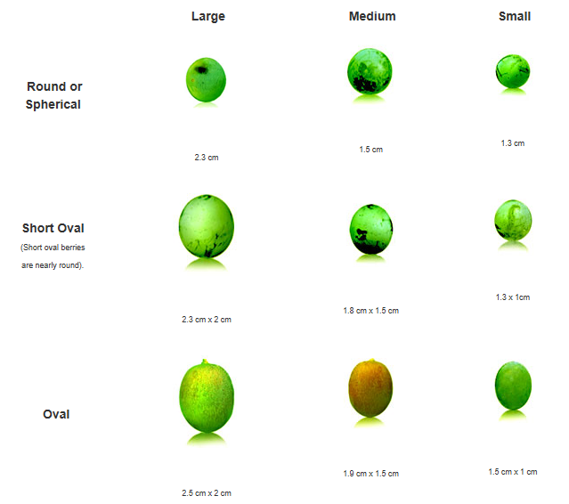 2.3 Profiles Of Major White Wine Varietals